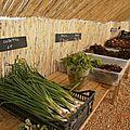 garéoult légumes bio var paca ruiz (10)