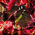 Quand l'automne saigne la vigne...