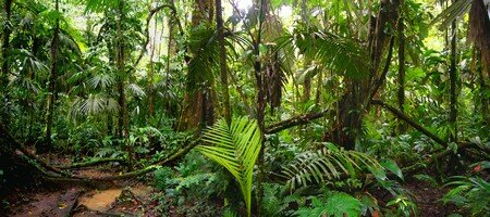 photo_rainforest2