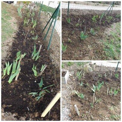 Jardin mars 2016 (14)