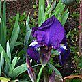 Iris 050316