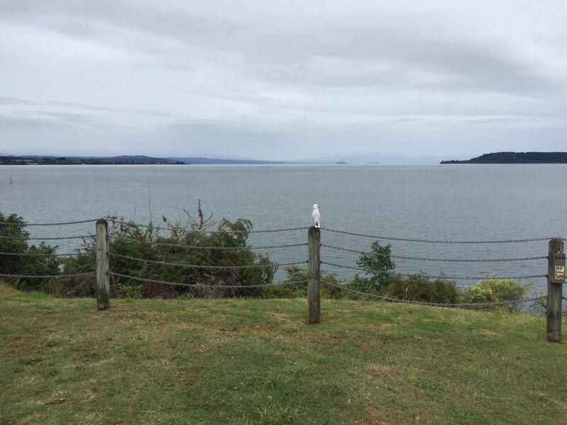 Lac_Taupo