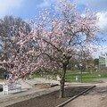 448 - 05/03 - Palmengarten - le parc et les animaux