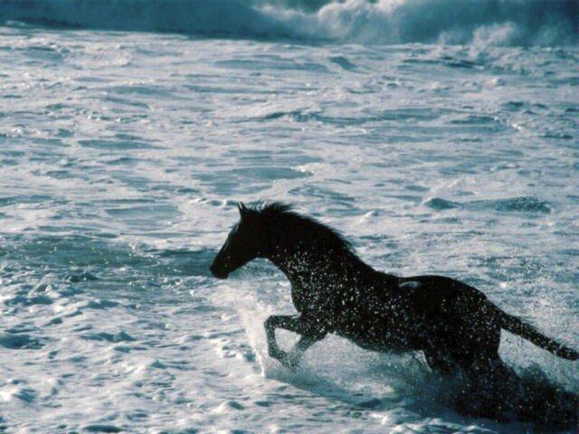 cheval_au_galop_dans_la_mer