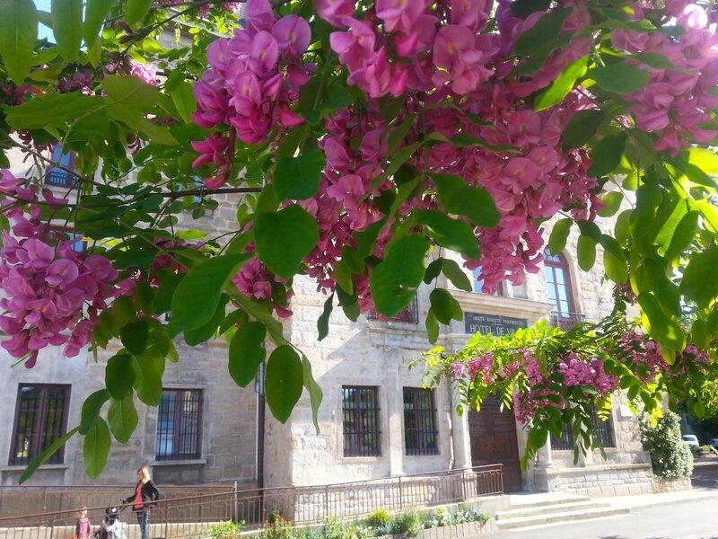 Hôtel de Ville samedi 9 mai 2015 (5)