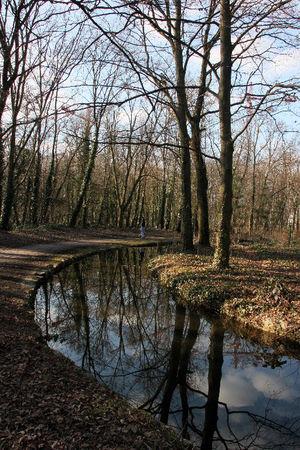 2_Bois_de_Boulogne__reflets__1619