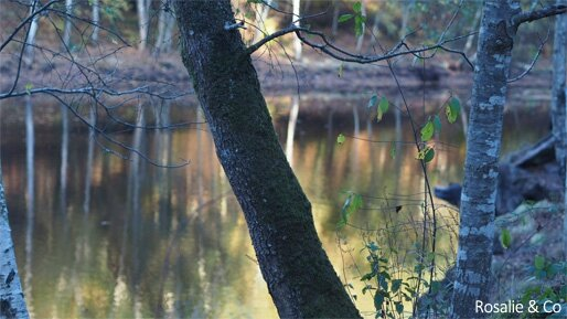 broceliande_5