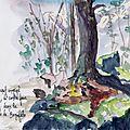 Corse - Forêt domanile de Bonifato