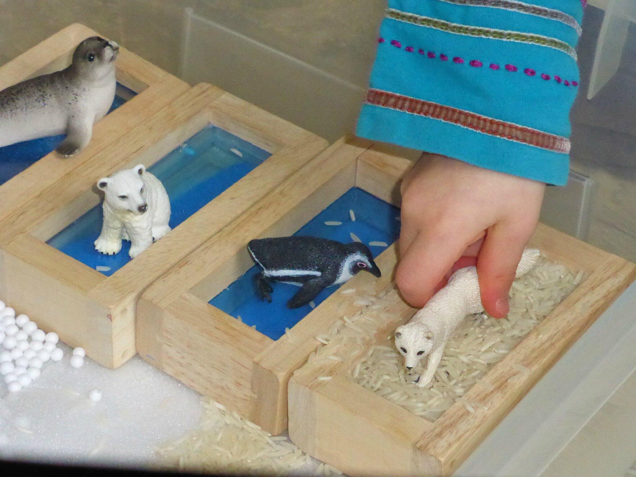 bac sensoriel jeu renard polaire