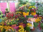 tijardin_latino_jardinerie