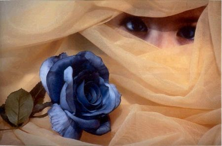 rosa blu 2
