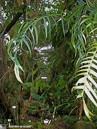 CIMG1415_Foret_tropicale