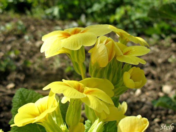fleurs loigné (7)