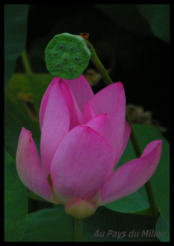 Hangzhou Xihu Saison des Lotus 19