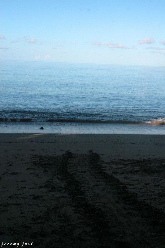 traces de tortue