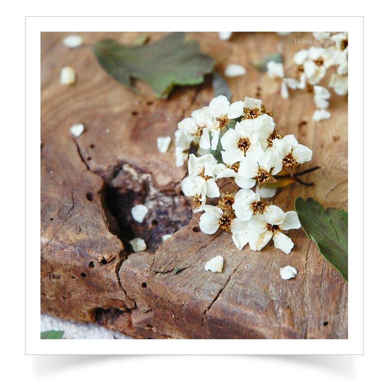 Détail-fleurs-séchées-3