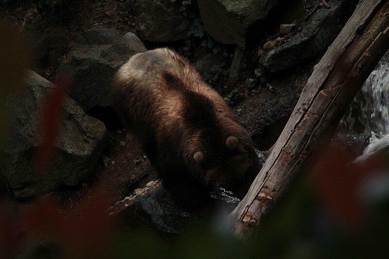 zoo 1-08 234