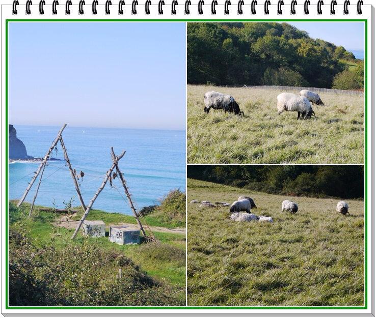 02 les moutons