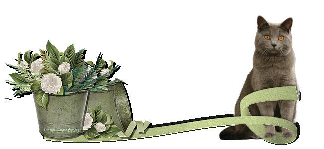 barre chat fleurs