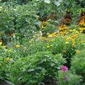 2008 08 16 Un zoom sur quelques fleurs de mon jardin