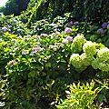 Fleurs totalement superbe du parc pasteur, merci les jardiniers de la ville