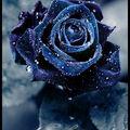 Lune bleue - 8 -