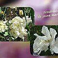 balanicole_2016_05_avril tulipes_27_froufrous jeune mariée
