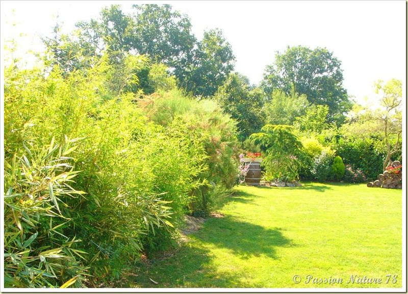 Petite promenade dans notre jardin (3)