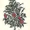 Bouquet de roses 17x12 cm 220€