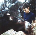 les ânes corses