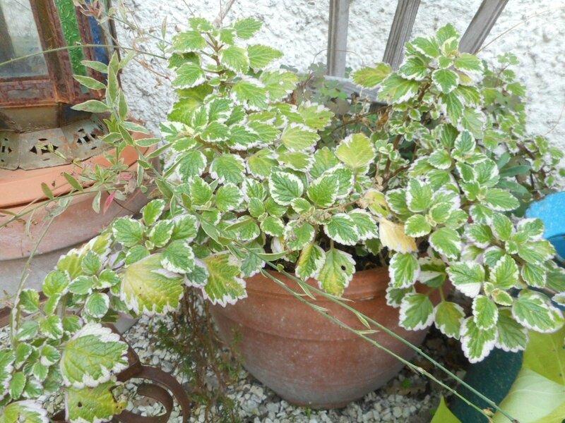 plantes vertes jardin (4)