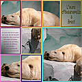 animaux_ours