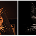montage-photo-chat-clinique-veterinaire
