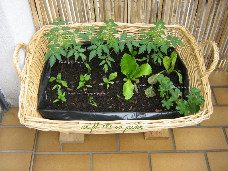 mini potager sur le balcon un fil un jardin. Black Bedroom Furniture Sets. Home Design Ideas