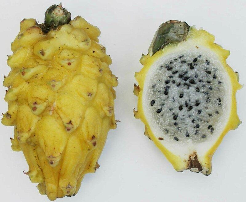 Yellow_pitaya
