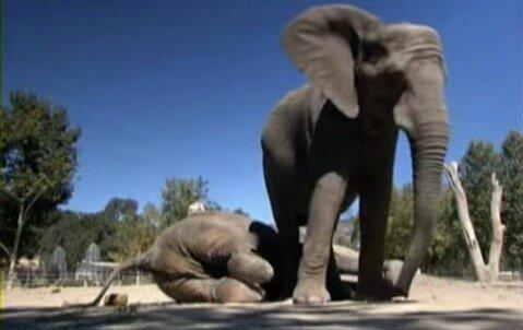 elephant zoo1