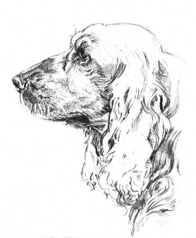Cocker dessin crayon hb photo de dessins illustrations - Dessin de cocker ...