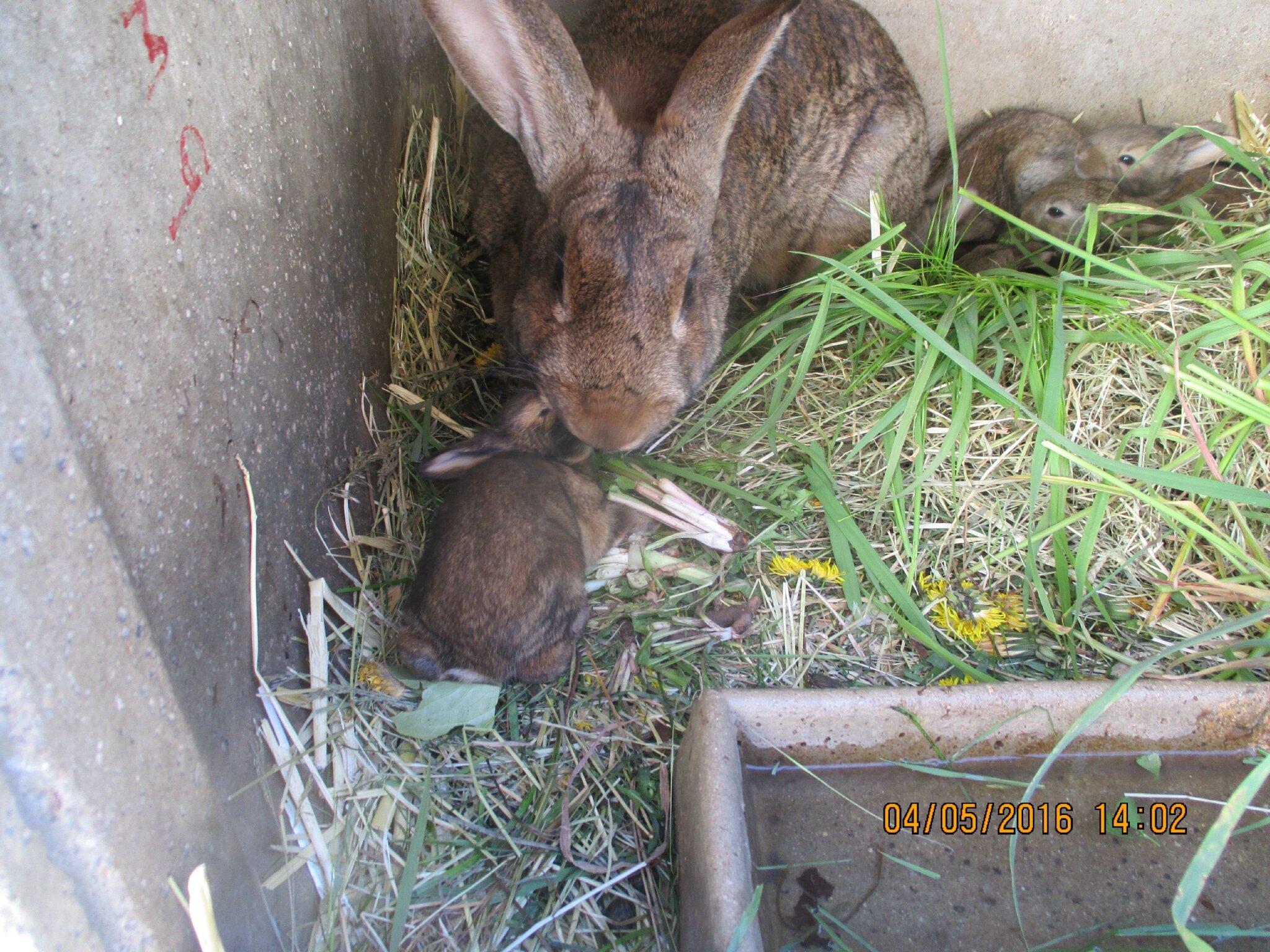 cette année,10 bébés lapins