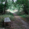 Sentier du jardin sauvage en sous bois