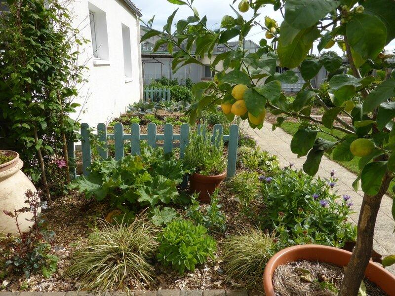12-potager-citronniers (5)