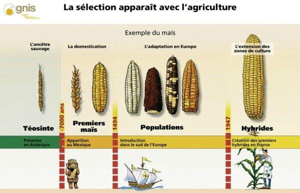 maïs-images