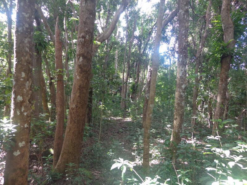 la forêt primaire