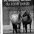 Le konik polski : qui es-tu ???