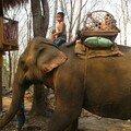 Tadlo - les elephants