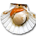 Coquilles st jacques - 10/10