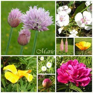 fleurs_du_jardin