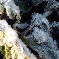 fleurs de givre (14)