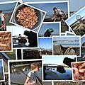 La pêche à la crevette du ris
