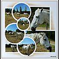Au hasard de nos promenades, les chevaux ...