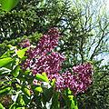 Jardin de mai